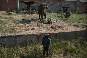 Снимка на деня: Торта за 57-ия рожден ден на единствения слон в България