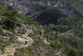 СЗО: Генезисът на Covid-19 е в пещерите с прилепи в Китай