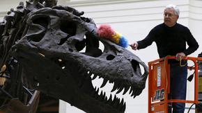 Бавно или експлозивно - как са израствали динозаврите