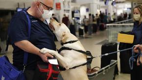 Доказано: кучета могат да надушват COVID-19