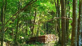 СИДП осигури дърва за огрев на 2 578 семейства в Шуменско