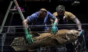 """Необикновена риба, наричана """"жив фосил"""", живее 100 години"""