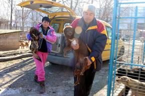 Пожарникари спасиха 5 кучета, хвърлени в кладенец