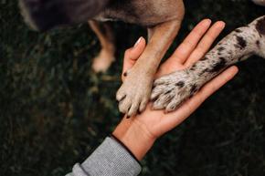 Лапите на кучетата са по-чисти от обувките на хората