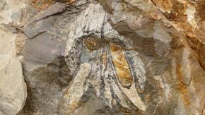 Морски хищник на 160 млн. години беше открит в най-сухата пустиня на света