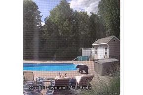 Мечка изненада мъж, събуди го от следобедната дрямка край басейна
