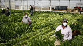 Незаконно пребиваващи работници в Италия ще могат да получават здравна помощ