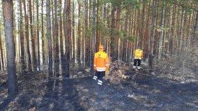 Гасиха пожар в борова гора край село Тушовица