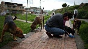 Разпространението на коронавируса може да е започнало от бездомни кучета