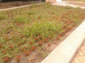 Цветна градинка обрасла с трева