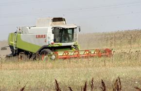 По-високи добиви отчитат земеделците при слънчогледа и царевицата