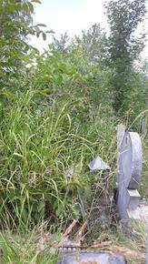 Змии в гробищния парк в Шумен