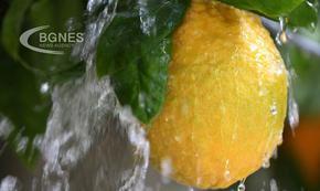 Ползите от лимоновата вода