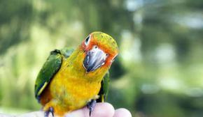 Манастирски папагал рецитира молитви и разговаря с отражението си в огледалото