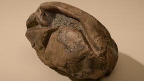 Загадъчен артефакт от Антарктида се оказа второто по големина яйце в света