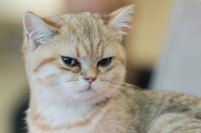 Заловиха котка - наркотрафикант