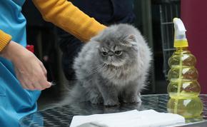 Грешки на стопаните подлудяват домашните котки