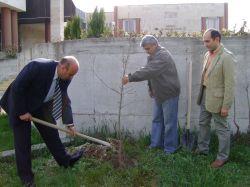 Кметът Бодуров засади фиданки пред сградата на общината