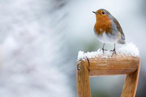 Защо птиците не замръзват през зимата