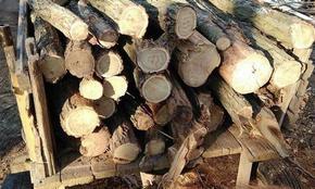 Конфискуваха автомобил, дърва и каруца при проверки в Шуменско