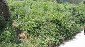 Трябва да се вземат мерки за тревата в Българанов