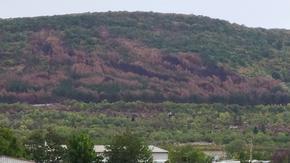 """Залесяват гората след пожара над """"Дивдядово"""""""