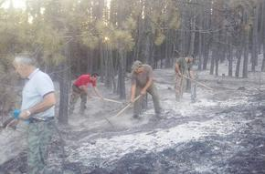 Проверка показа, че горските стопанства са в готовност за реакция при пожар