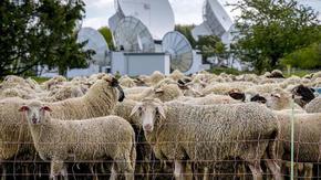 ЕС се договори как ще се харчат земеделските субсидии
