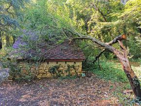 Премахнаха дърво, паднало върху заслон на Платото
