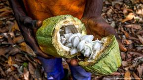 Шоколадът: Милиони деца работят в мизерия, за да радват свои връстници