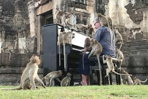 Пианист изнася концерти за маймуни в Тайланд