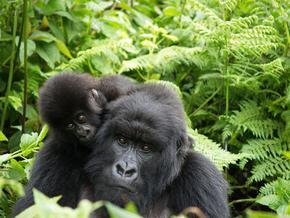 Ето кои са най-застрашените животни на планетата
