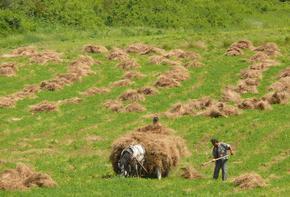 С над 10% за година скача цената на сделките с ниви в Шуменско