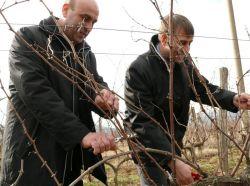 Отбелязаха Трифон Зарезан в най-лозарския и винарски край в региона