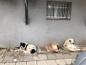 Глутница кучета тероризират цял квартал