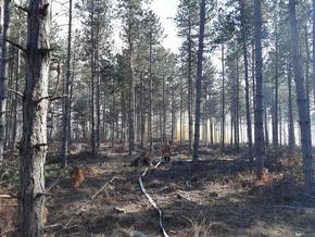 15 горски пожара в Шуменско през 2020 година