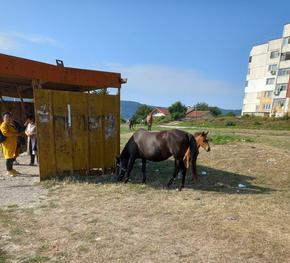 """Неизползваема автобусна спирка и разхождащи се животни в кв. """"Еверест"""""""