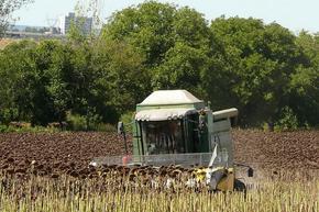Земеделските стопани в Шуменско прибраха 66 410 тона слънчоглед