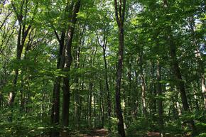 СИДП стартира прием на заявления за продажба на частни гори