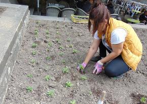 Садят 44 000 цветя в Шумен