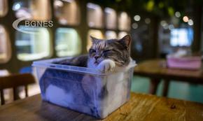 Котките обичат въображаеми кутии