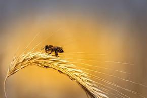 Отбелязваме Международния ден на пчелата