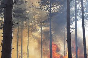 8 горски пожара в Шуменско от началото на годината