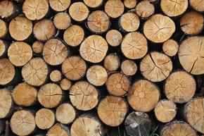 Горските стопанства в Шуменско доставиха 22 279 куб.м. дърва за огрев