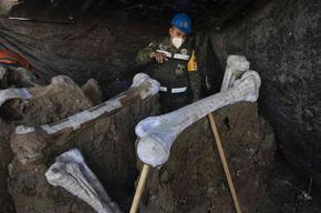 Откриха най-голямото гробище на мамути в Мексико