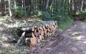 Горските стопанства в Шуменско снабдиха над 1000 семейства с дърва за огрев