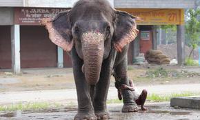 Земевладелец в Индия завеща имуществото си на два слона