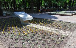 Разкрасяват Шумен с 30 000 стръка цветя