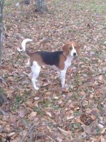 Изгубено куче на име Чара
