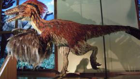 Праисторически пигменти разкриват еволюцията на бозайниците